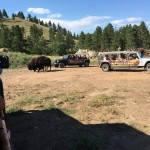 Buffalo Jeep Safari